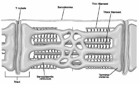 Encuentra Aquí Información De Biología Celular Y Genética Médica