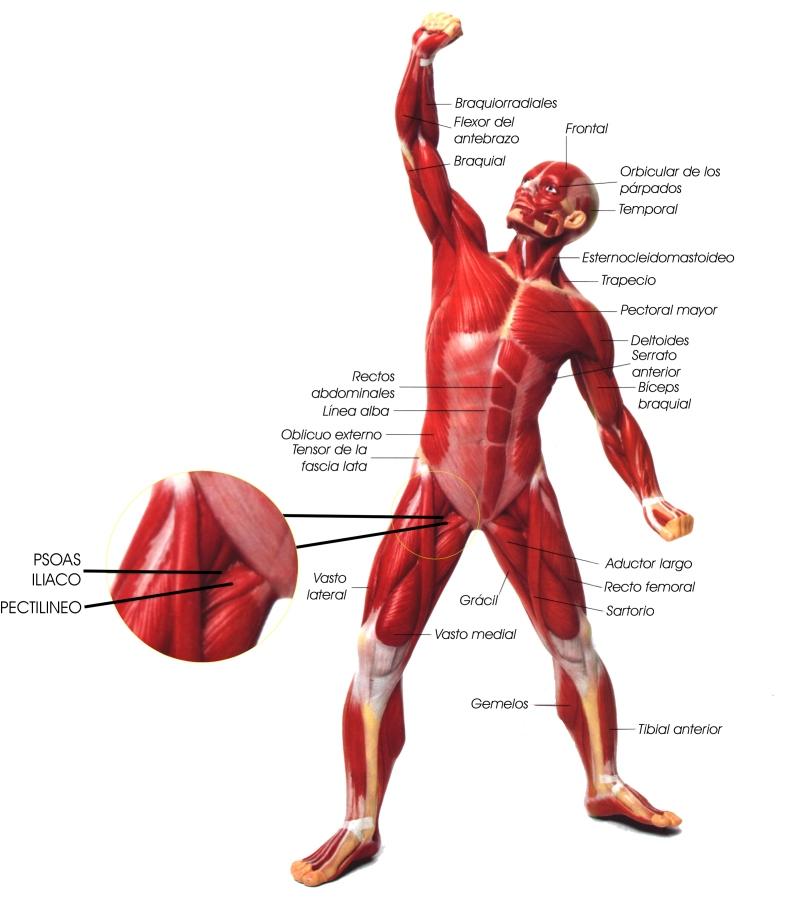 'Anatomía y Fisiología General'