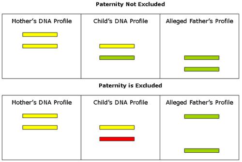 'Genética forense'