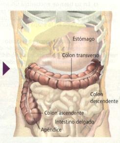 'Sistemas digestivos especializados'