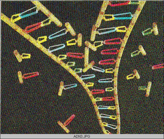 'Estructura del {ADN}'
