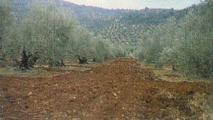 'Agricultura ecológica'