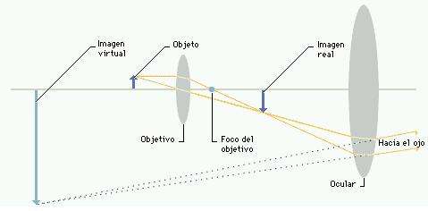 Microscopi òptic # Microscopio óptico