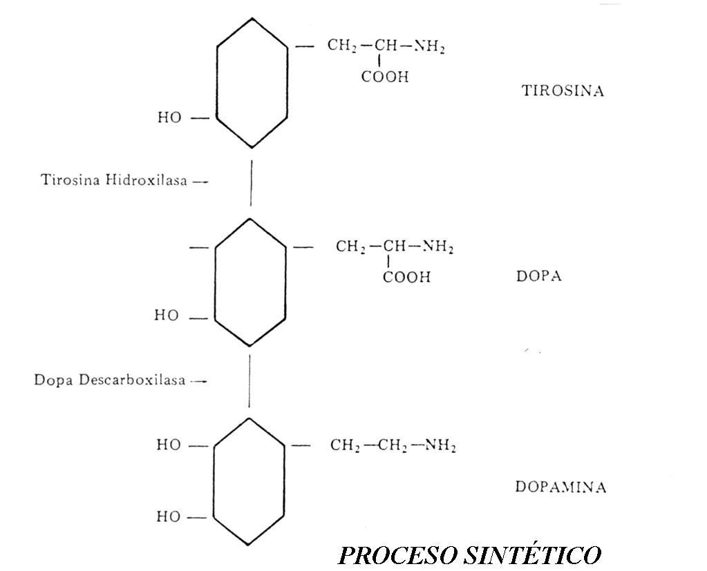 Dopamina y conducta