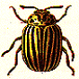 'Insectos'