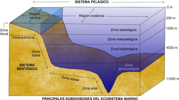 El ecosistema marino