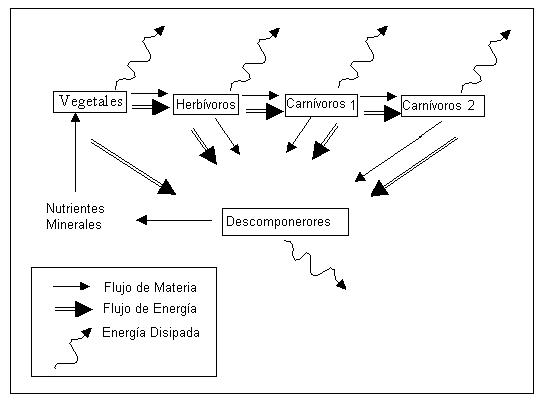 'Ecología y evolución'