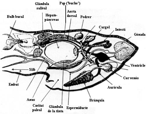 Fauna marina y terrestre