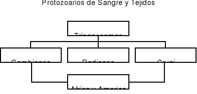 'Parasitología'