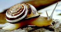 Mollusks arthropods # Moluscos