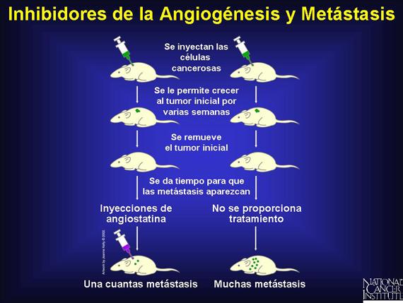 'Angiog�nesis'