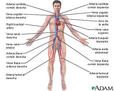 'La reanimaci�n cardiopulmonar (RCP)'