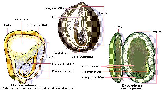 Biología agropecuaria