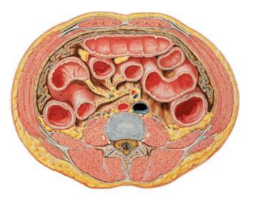 'Columna vertebral'