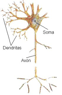'Neuronas'