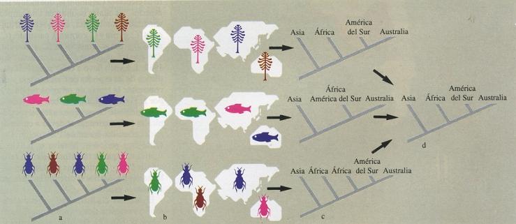 'Historia animalium; Aristóteles'