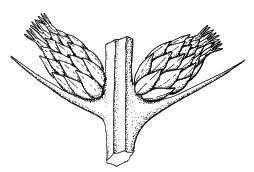 'Botánica'