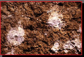 'Salinidad del suelo'