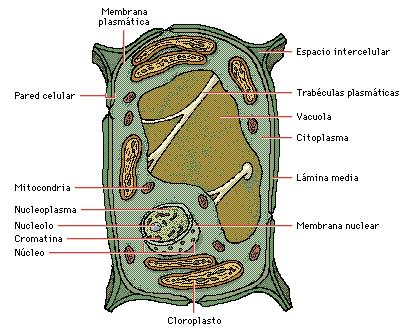 'Organización celular de los seres vivos'